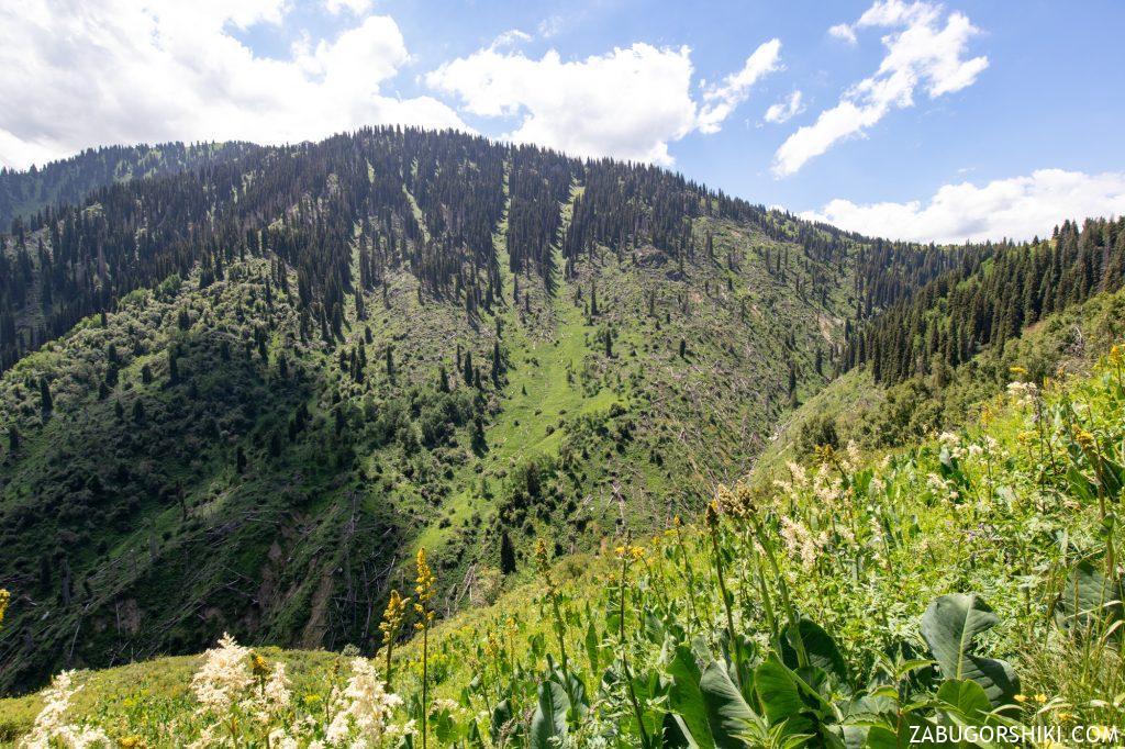 Поваленные деревья в горах Алматы