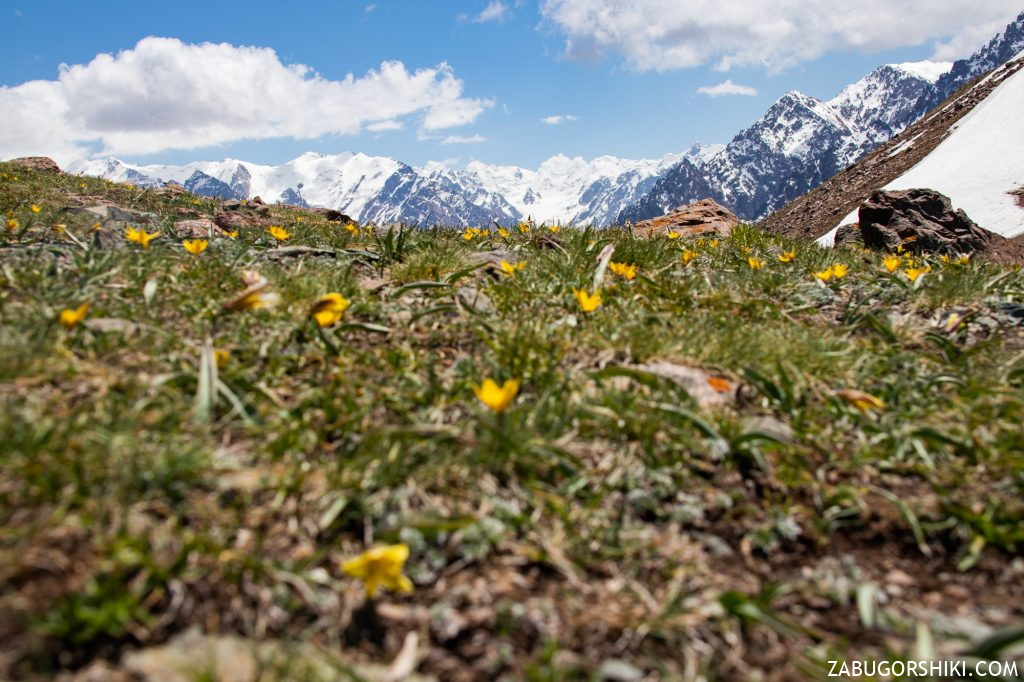 Альпийская поляна.