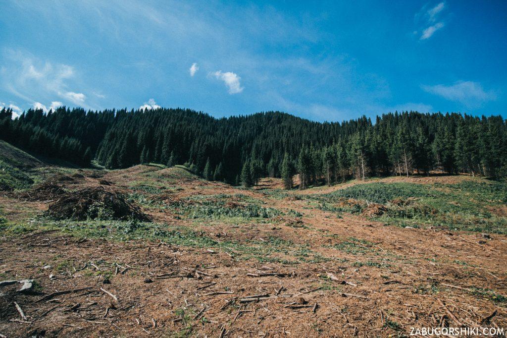 Вырубленные деревья в Бутаковском ущелье