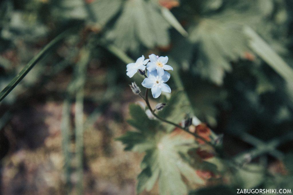 Растительность в Бутаковском ущелье