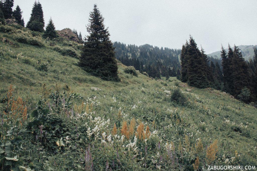 Цветочная поляна в Бутаковском ущелье.