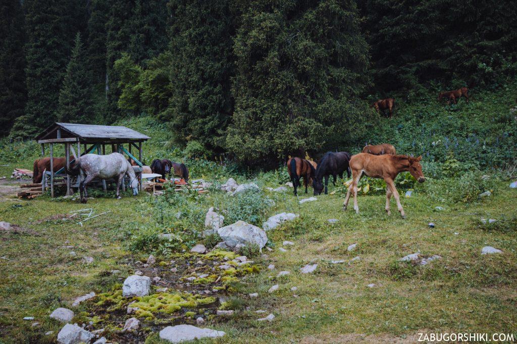 Жеребенок и лошади